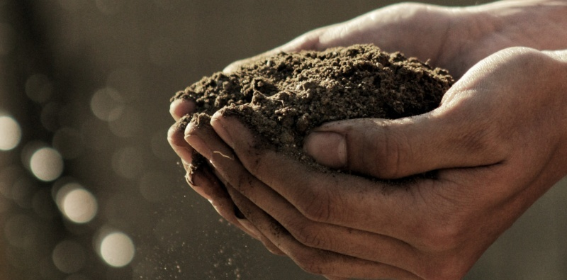 How to choose the soil for your cannabis crop