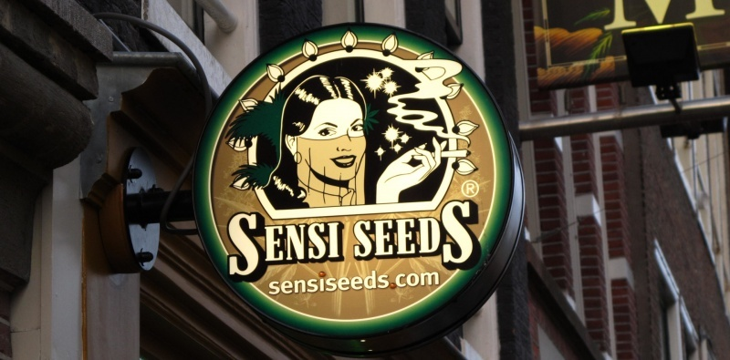 Sensi Seeds. Tradition and innovation in the creation of marijuana seeds.