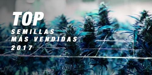 TOP 10 2017: las semillas de marihuana más vendidas