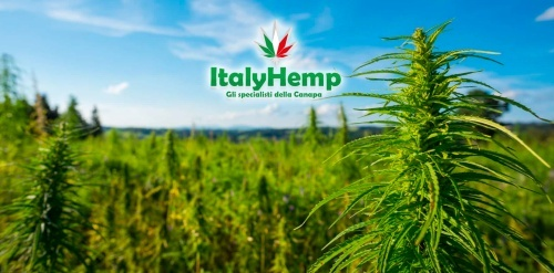 Interview with ItalyHemp, legal bud growers in Europe
