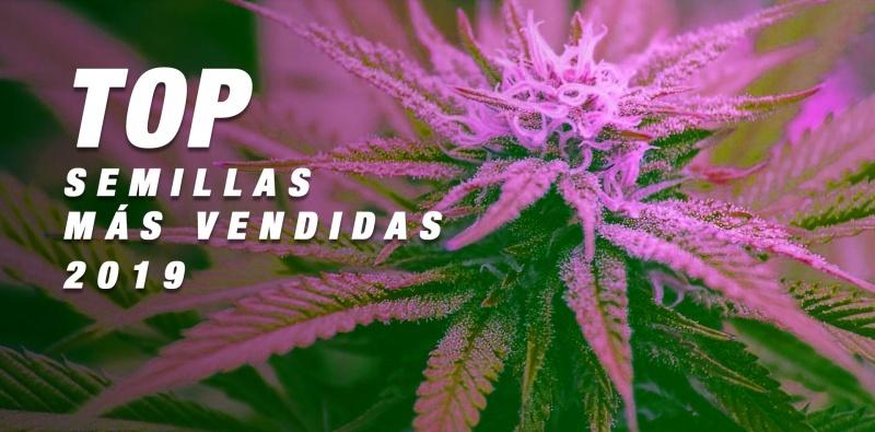 TOP 2019: las semillas de marihuana más vendidas