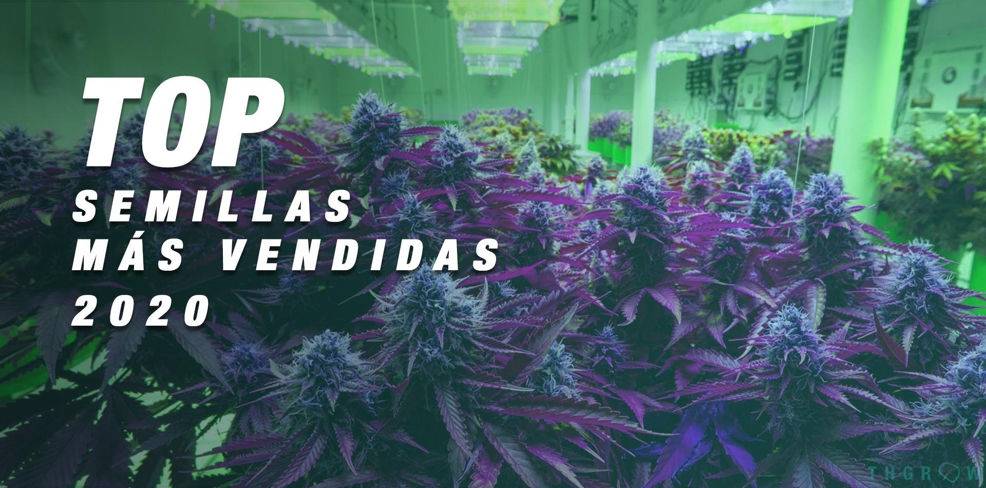 TOP 2020: las semillas de cannabis más vendidas