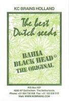 Bahia Black Head Regular