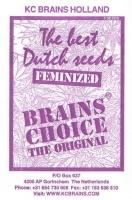 Brains Choice Feminizada