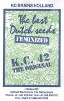 K.C. 42 Feminizada