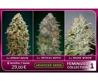 Feminized Collection no.1 Feminized