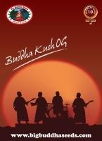 Buddha Kush OG Feminizada