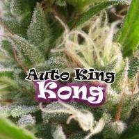 Auto King Kong Feminizada
