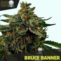 Bruce Banner Feminized