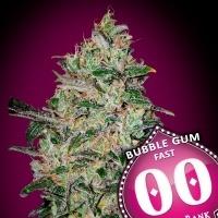 Bubble Gum Fast Feminizada