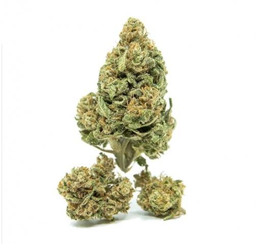Life High CBD Cannabis - 10 grams