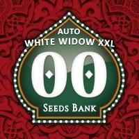Auto White Widow XXL Feminizada