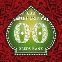 Sweet Critical CBD Feminizada