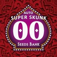 Auto Super Skunk Feminized