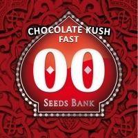 Chocolate Kush Fast Feminized