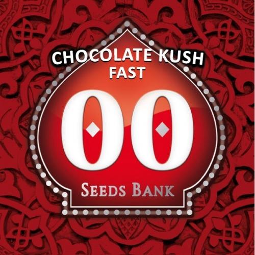 Chocolate Kush Fast Feminizada