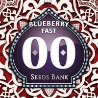 Blueberry Fast Feminized