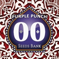 Purple Punch Feminized