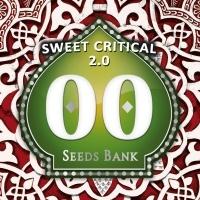Sweet Critical 2.0 Feminized