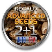 ADVANCED SEEDS: 2 Semillas Auto + 1 Feminizada