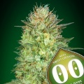 Auto Sweet Critical Feminized