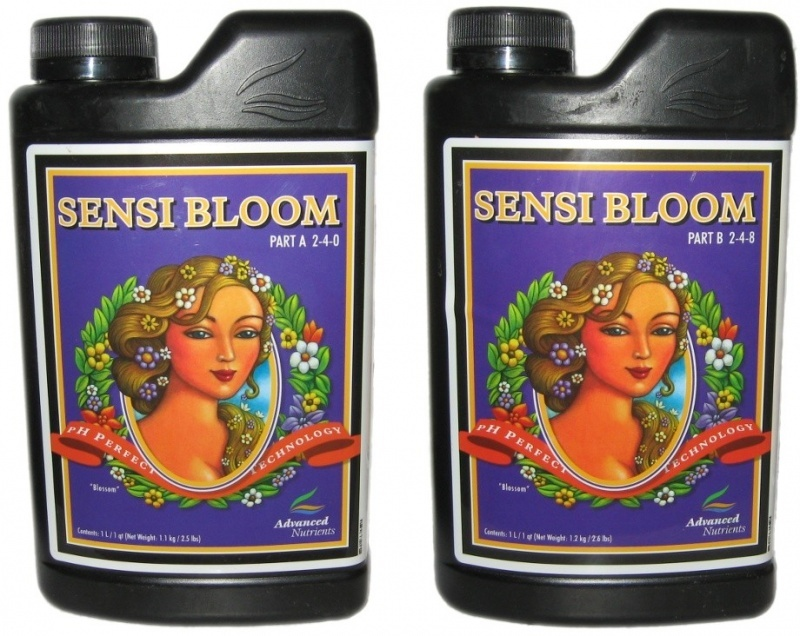 Sensi Bloom A - B RENOVACIÓN