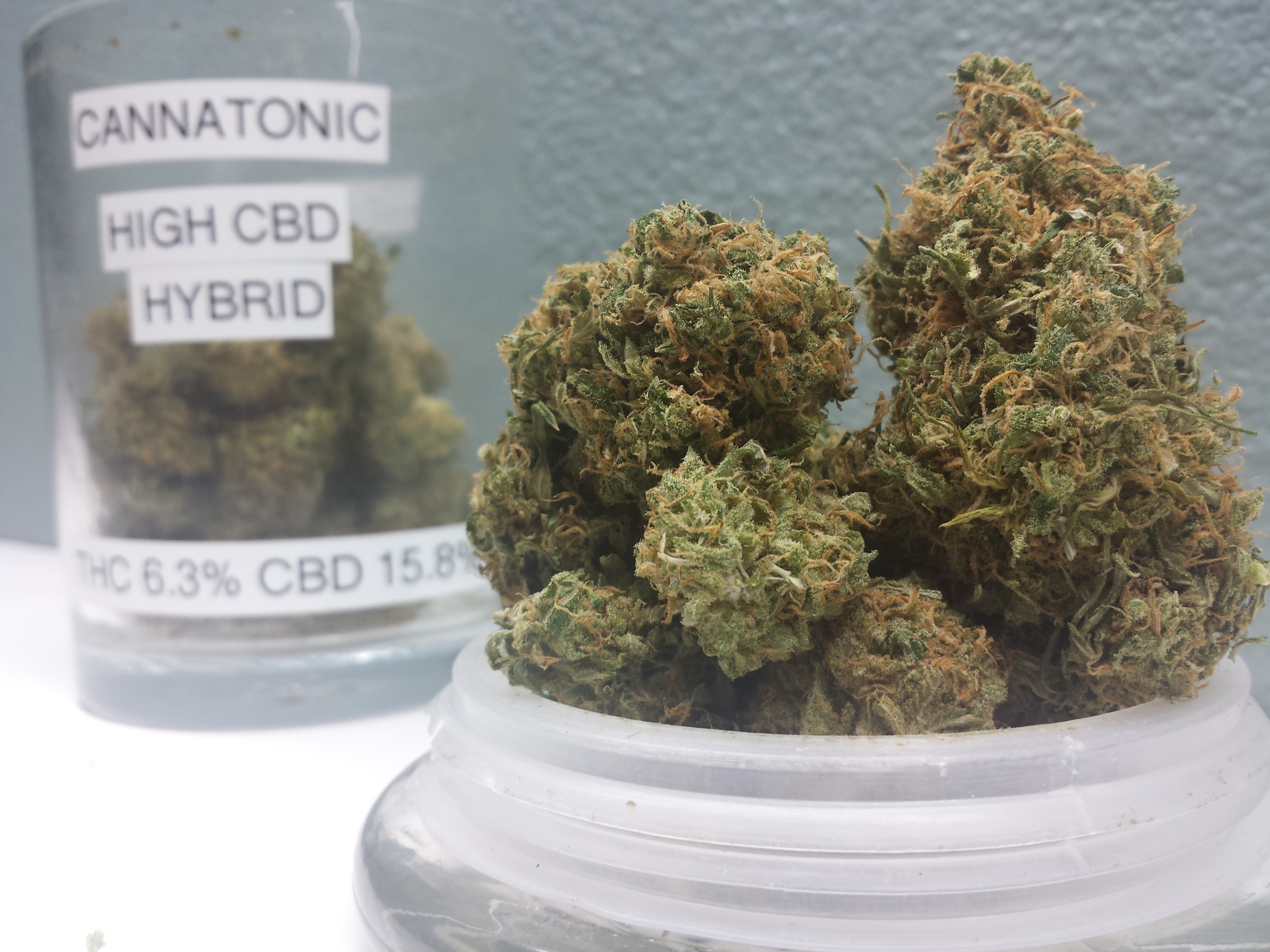 Cannatonic CBD Rich
